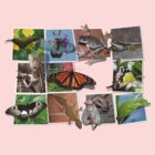 Collage of Australian Native Wildlife, WOMENS by peterstreet