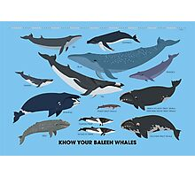 Know Your Baleen Whales Photographic Print