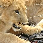 Lion Cub by Adrianne Yzerman