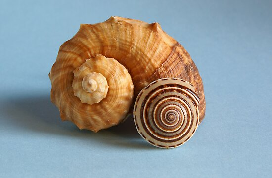 A shell and a snail by CanDuCreations