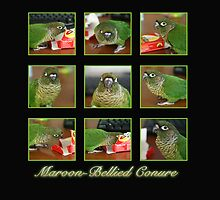 Maroon-bellied Conure by Kimberly Palmer