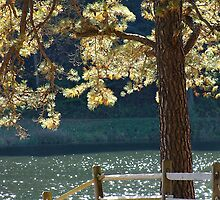 Glistening Pine by vigor