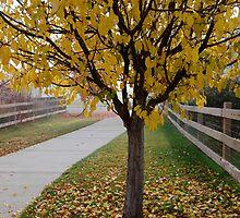 Golden Path by Pamela Hubbard