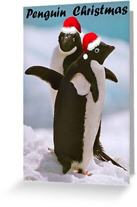Adelies on ice - Christmas Card by Steve Bulford