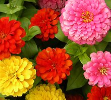 Zinnias by Christine Bennett