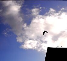 blue white flight by goodluckserrano