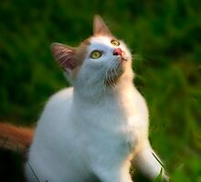 Pretty Kitty by sherryk