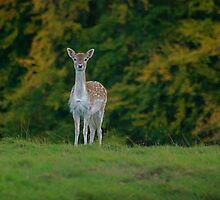Studley Royal Deer Park by dougie1