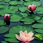 Lotus by Aurobindo Saha