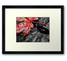 fallen autumn leaf ... Framed Print
