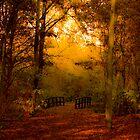 Autumn Walk by Els Steutel