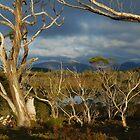 Lake Windermere, Overland Track, Tasmania by tasadam