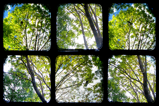 Look Through My Window by Kitsmumma
