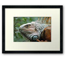 Close to the Iguana Framed Print