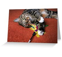 Fun with Feathers Greeting Card