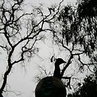 Peacock Silhouette by bigtiny