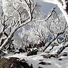 Snowgums 3 by David Sundstrom