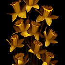 Dark Daffodils by Marsha Tudor