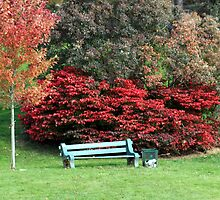 Autumn Bench by HALIFAXPHOTO