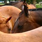 Deep in horses by MaryRVogt