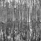 Swamp Reflections by Michael McCasland