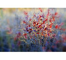 Frosted Morning... Photographic Print