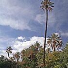Tall Trees by Karen Millard