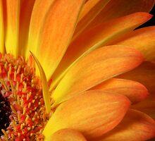 Orange by SmoothBreeze7