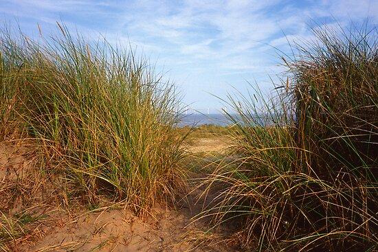 Wind Farm, Caistor Sands, Norfolk, UK by Gary Rayner