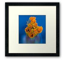 Coral. Framed Print