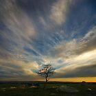 The lone tree by Peter Hammer