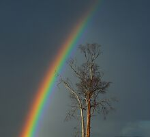 Pot of Gold, East Coast Tasmania by NickMonk