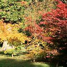Autumn Light by Iani