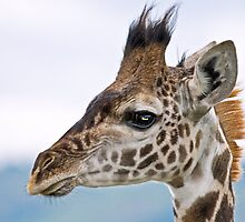 Giraffe Profile 2 by Peter Denness