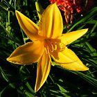 Yellow Glow by HeatherBud