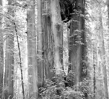 Redwood National Park by Jonathan Eggers