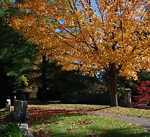 mt auburn cemetery - path by colleenboston