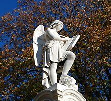 mt auburn cemetery - angel by colleenboston