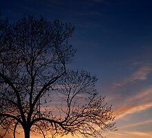 Black Walnut in Sunset by Anna Lisa Yoder