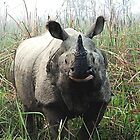 One horned Rhino by Braedene