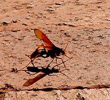 photoj Insect, Sunday Stroll by photoj