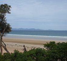 Waratah Bay by nikki newman