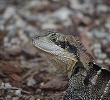 Water Dragon by bails52