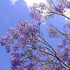 Jacaranda Blue  by Virginia McGowan