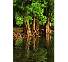 Under The Everglades Photographic Print
