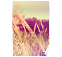 Brush Grass Poster