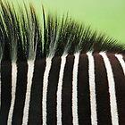 Stripes by hfaulkner