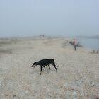 Dog on Shingle by scarlet james