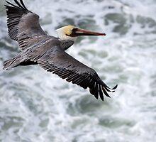 Soaring Above The Seas.... by Carol Barona