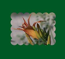 Day Lily Surprise by Jonice
